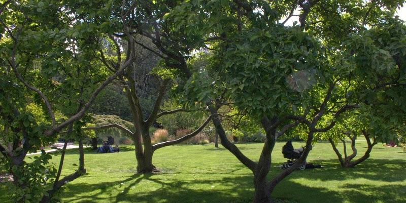 Landbohøjskolens Have